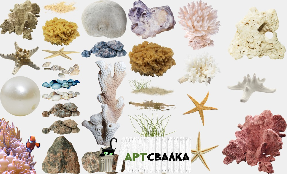 Кораллы и морские звезды. Часть 2 | Corals and sea stars. Part 2